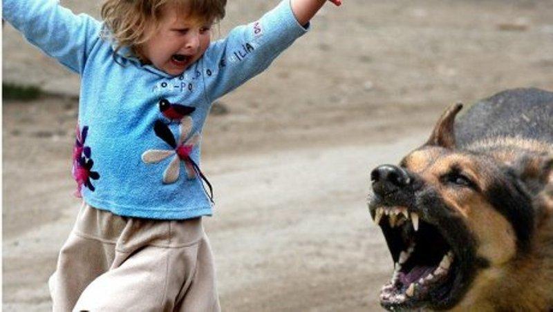 собака кидается на ребенка