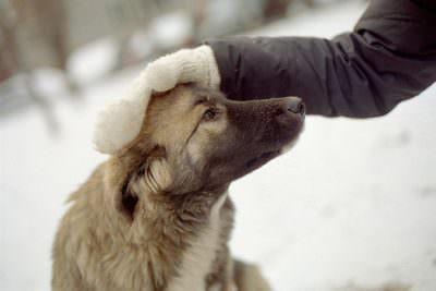 погладить бездомную собаку