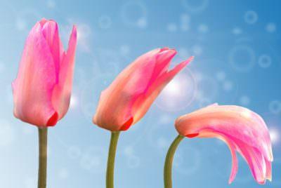 цветут цветы